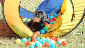 Beschäftigung, Spiele mit Hunden