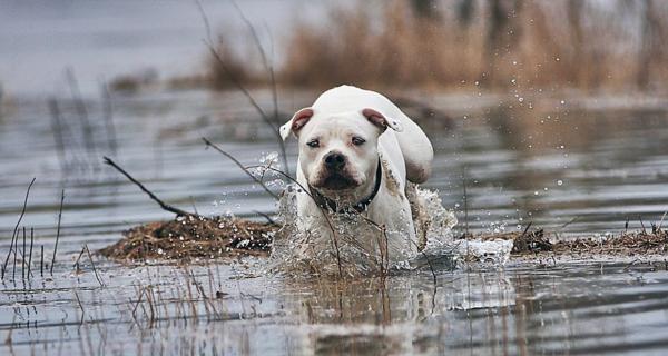 Anti-Aging Wellness, Pflege bei Hunden
