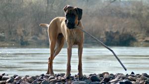 Hundehaltung und Umwelt