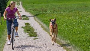 Sport, Bewegung, Fitness bei Hunden