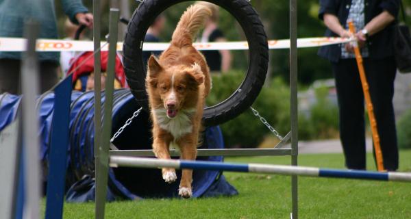Test für Hunde und Besitzer