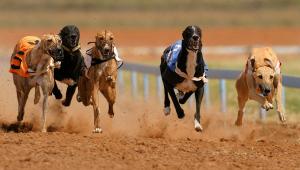 Training von Sporthunden