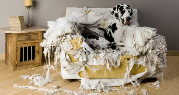 Verhaltensmanagement bei Hunden